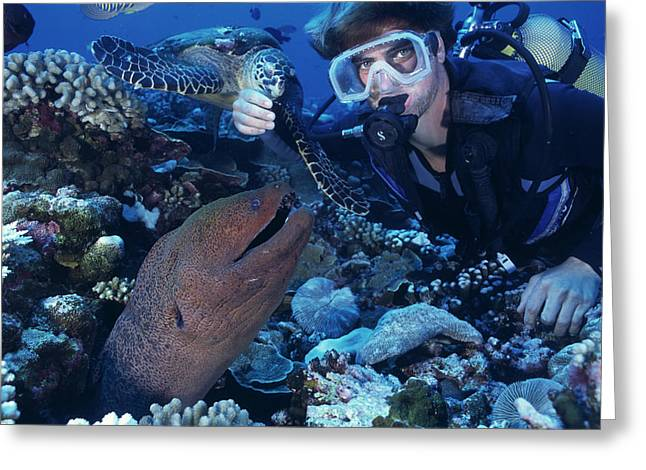 Scuba Diver Greeting Card by Alexis Rosenfeld