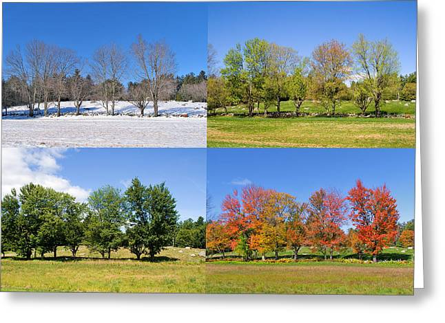 4 Season Trees Greeting Card