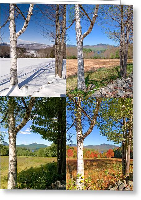 4 Seasons Chocurua Vertical Greeting Card by Larry Landolfi