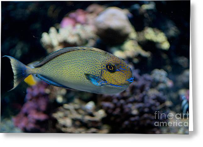 Tropical Fish Greeting Card by Carol Ailles