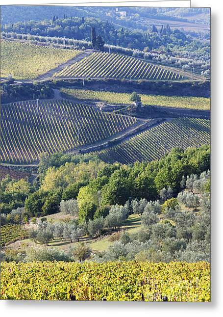 Vineyards And Olive Groves Greeting Card