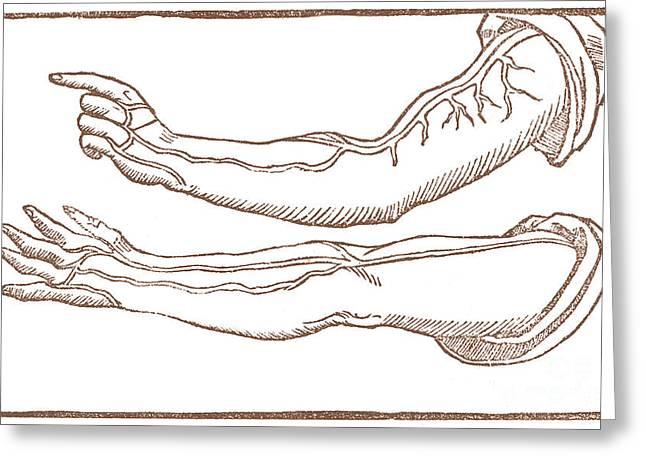 Historical Anatomical Illustration Greeting Card by Science Source
