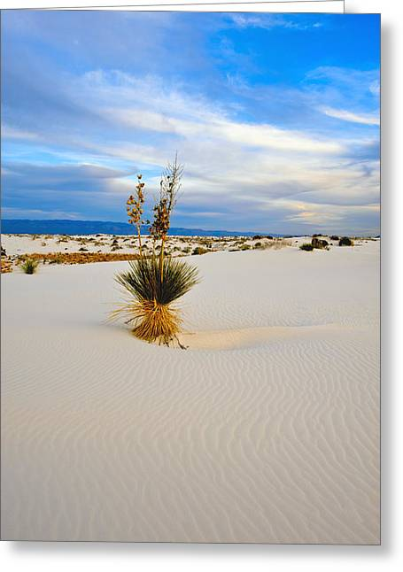 White Sands Greeting Card by Larry Gohl