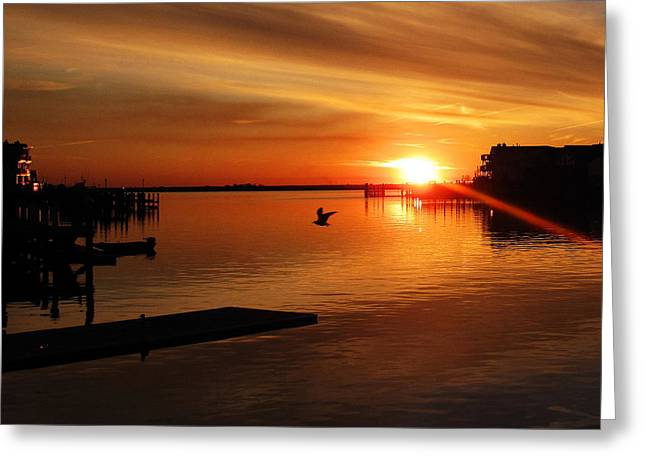 Bay Sunset Greeting Card by Mary McCusker