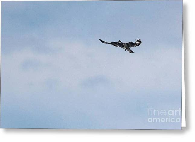 Belted Kingfisher Greeting Card by Jack R Brock