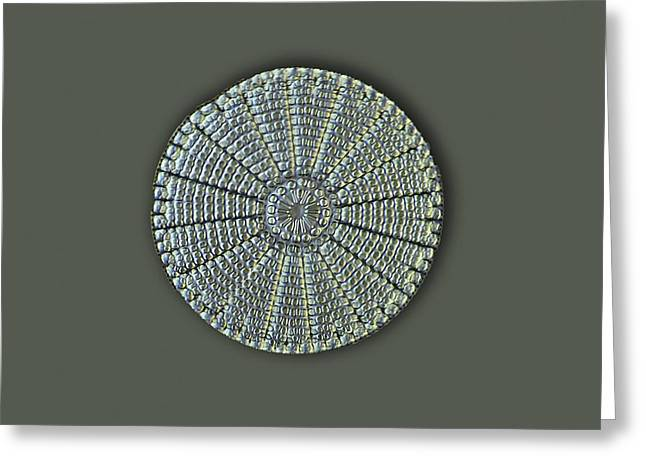 Diatom, Light Micrograph Greeting Card by Frank Fox