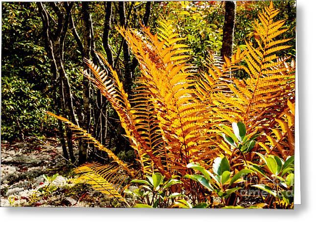 Fall Color Fern Greeting Card by Thomas R Fletcher
