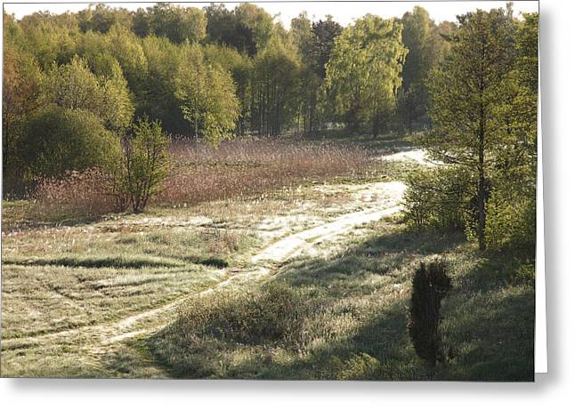 forest in Ainazi Greeting Card