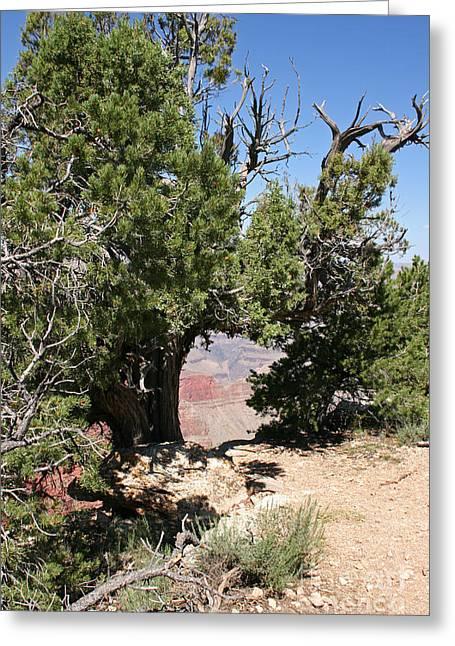 Grand Canyon National Park Usa Arizona Greeting Card by Audrey Campion