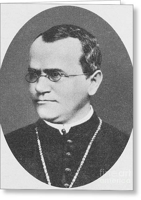 Gregor Mendel, Father Of Genetics Greeting Card by Science Source