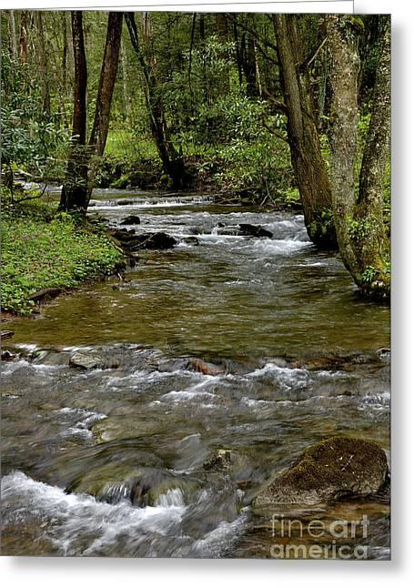 Monongahela National Forest Greeting Card by Thomas R Fletcher