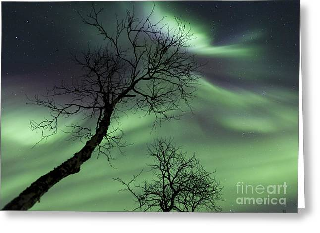 Northern Lights In The Arctic Greeting Card