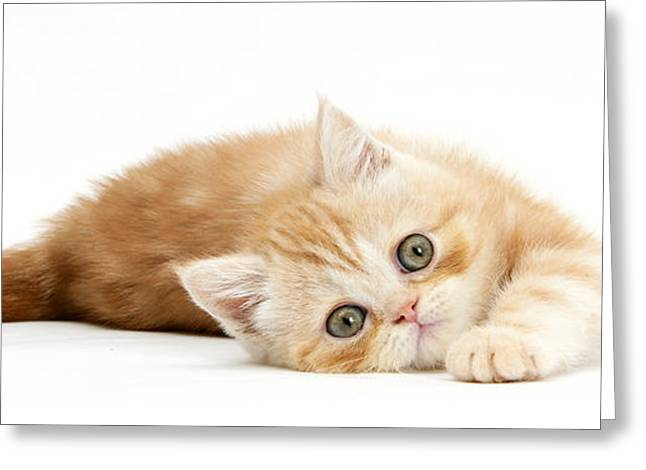 Playful Kitten Greeting Card by Mark Taylor