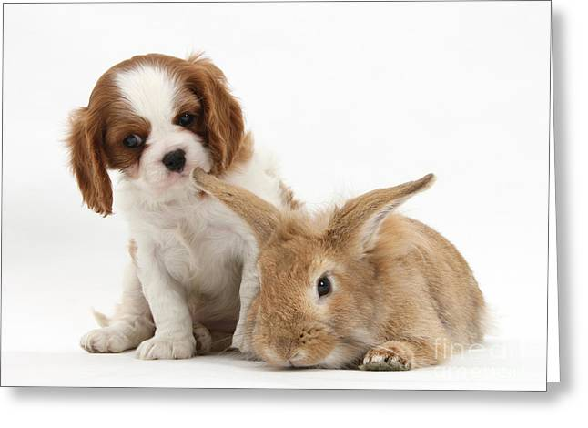 Rabbit And Puppy Greeting Card by Mark Taylor