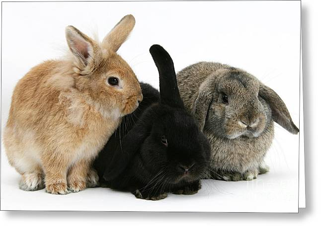 Rabbits Greeting Card by Mark Taylor