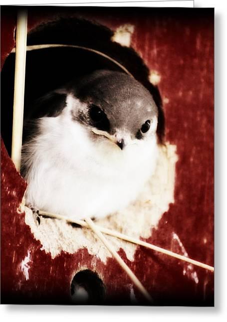 Red Barn Birdie Greeting Card