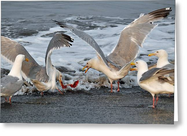 Seagulls Greeting Card by Debra  Miller