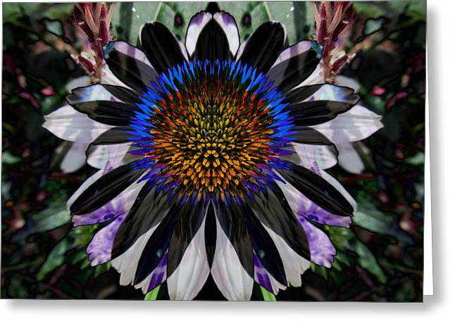 Coneflower Greeting Card by Michele Caporaso