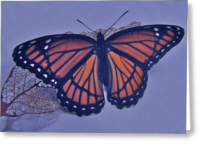 Butterfly Design Collection Greeting Card by Debra     Vatalaro