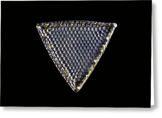 Diatom, Light Micrograph Greeting Card