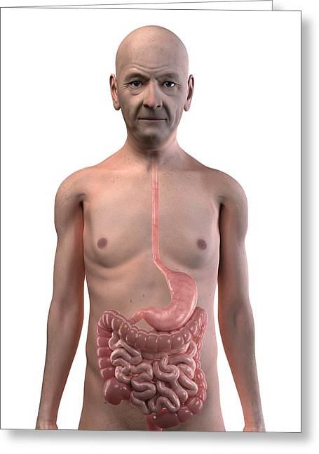 Healthy Digestive System, Artwork Greeting Card
