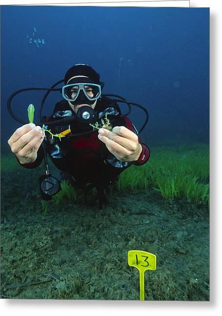 Invasive Seaweed Control Greeting Card by Alexis Rosenfeld