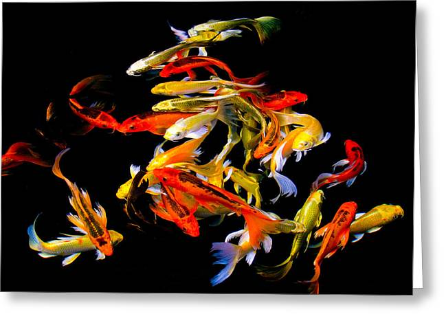 Koi Cluster Greeting Card by Chua  ChinLeng