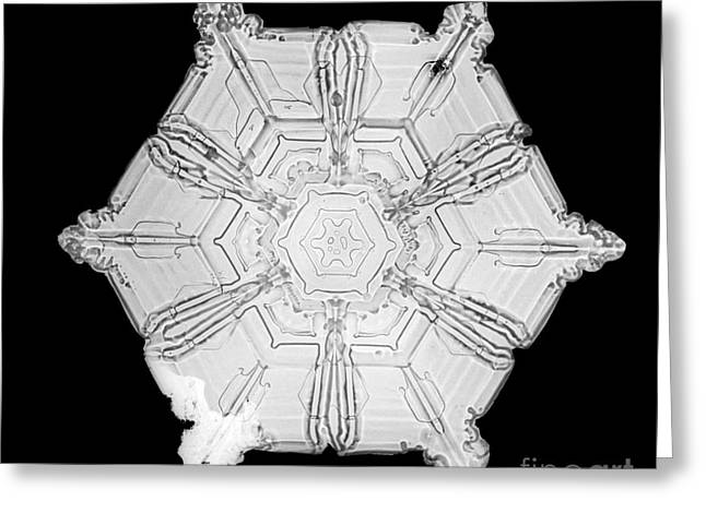 Snowflake Greeting Card by Science Source