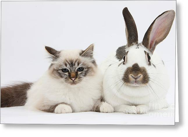 Tabby-point Birman Cat And Rabbit Greeting Card by Mark Taylor