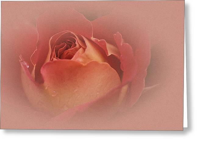 Vintage Rose Greeting Card by Richard Cummings