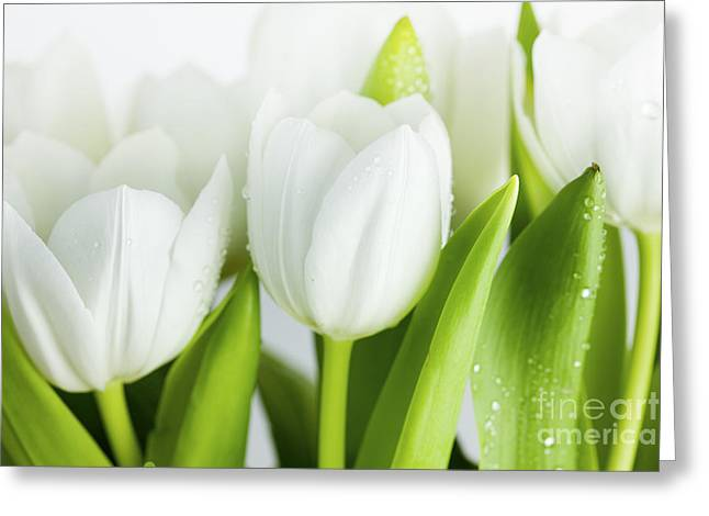 White Tulips Greeting Card by Nailia Schwarz