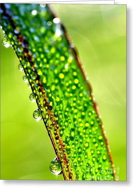 Dewdrops On Lemongrass Greeting Card by Thomas R Fletcher