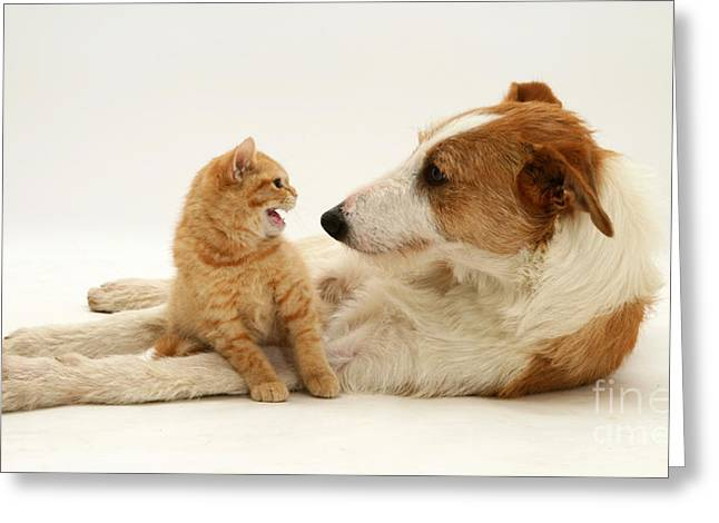 Dog And Kitten Greeting Card by Jane Burton