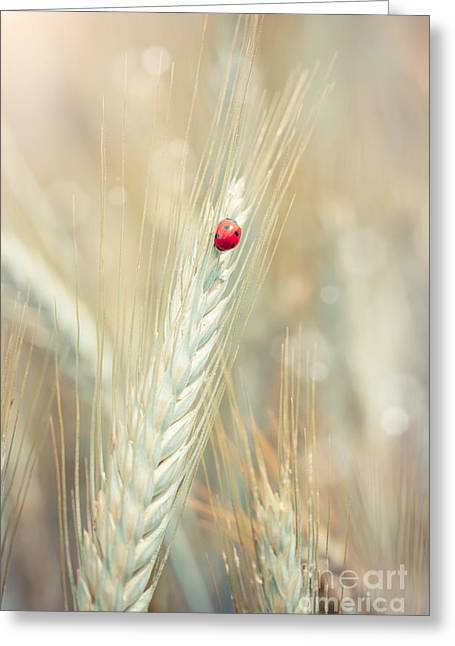 Ladybug On A Spike Greeting Card by Sabino Parente