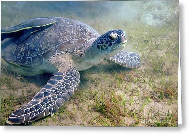 Turtle Greeting Card by MotHaiBaPhoto Prints
