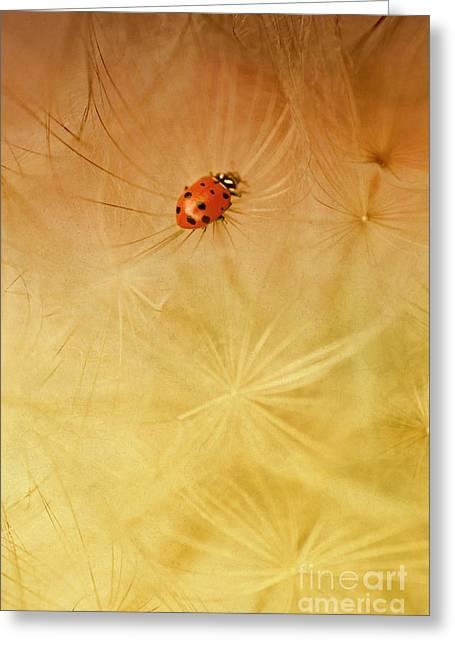 Dandelions Greeting Card by Iris Greenwell