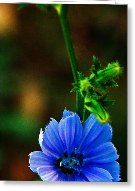 Flower Greeting Card by Lenroy Johnson