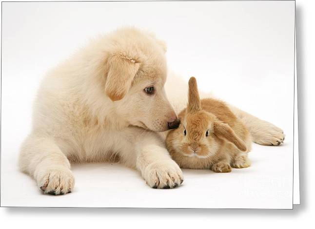 Rabbit And Pup Greeting Card by Jane Burton