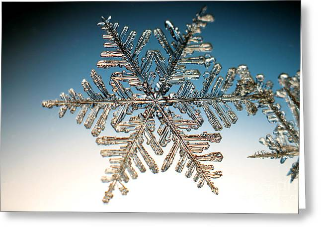 Snowflake Greeting Card by Ted Kinsman