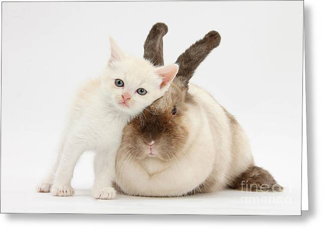 Kitten And Rabbit Greeting Card by Mark Taylor