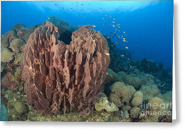 A Barrel Sponge Attached To A Reef Greeting Card by Steve Jones
