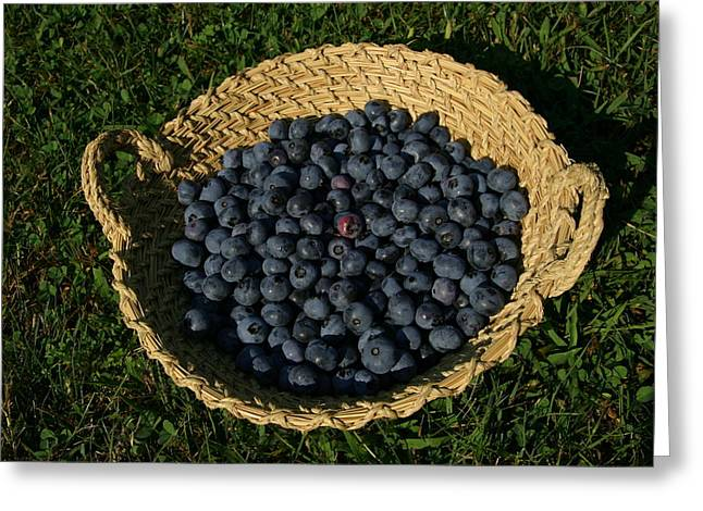 A Basket Of Fresh-picked Maine Greeting Card