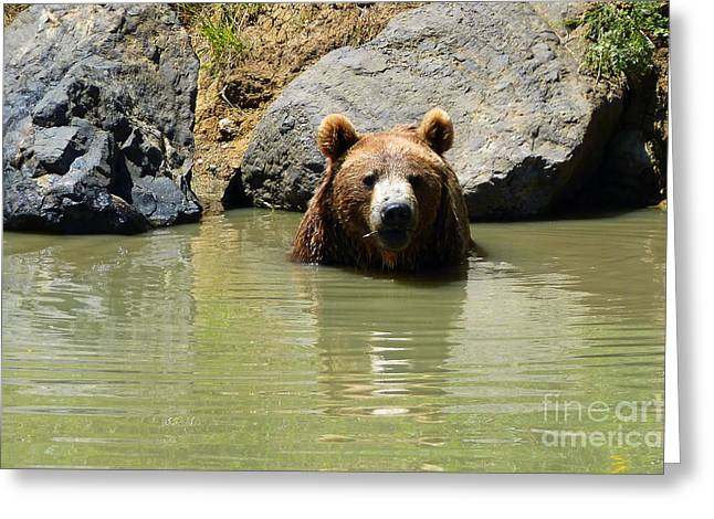 A Bear's Hot Tub Greeting Card by Methune Hively
