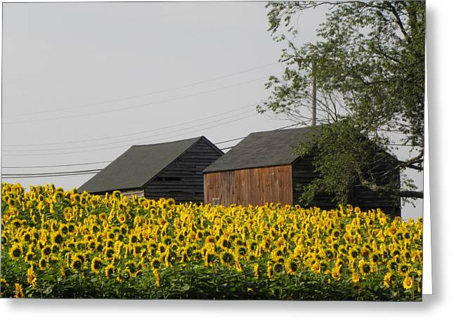 A Beautiful Country Setting In Ct Greeting Card by Kim Galluzzo Wozniak