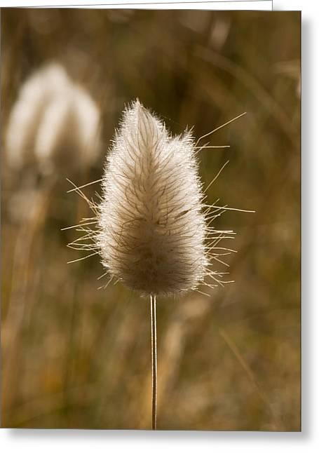 A Beautiful Seed Pod With Beautiful Sun Reflection Greeting Card