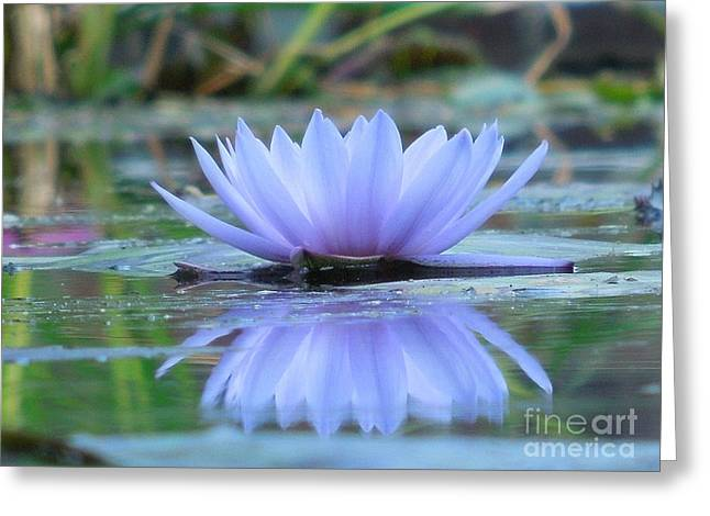 A Beautiful Water Lily Reflection Greeting Card by Chad and Stacey Hall