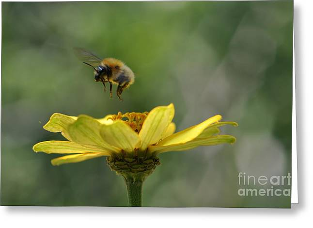 A Bee Greeting Card by Sylvie Leandre
