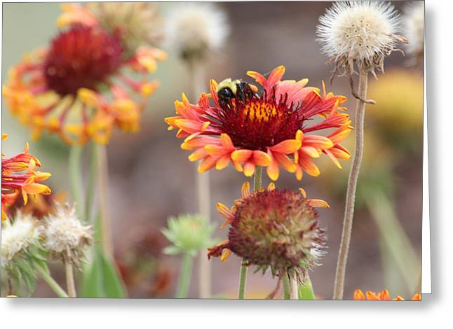 A Bee's Bliss Greeting Card by Janet Mcconnell