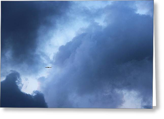 A Bird Flying In Cloudy Sky Greeting Card by Gal Ashkenazi