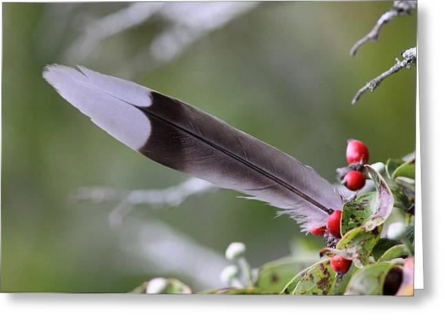 A Birds Christmas Greeting Card by Travis Truelove